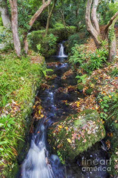Photograph - Autumn Forest Stream by Ian Mitchell