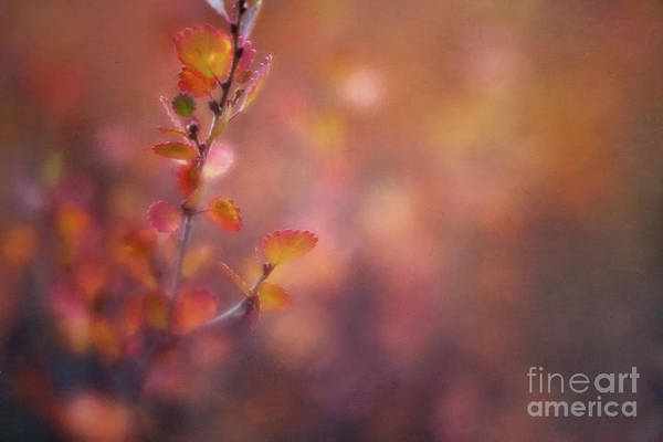 Alder Photograph - Autumn Gold by Priska Wettstein