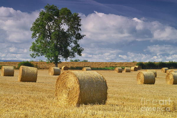 Photograph - Autumn Hay Bales by Martyn Arnold
