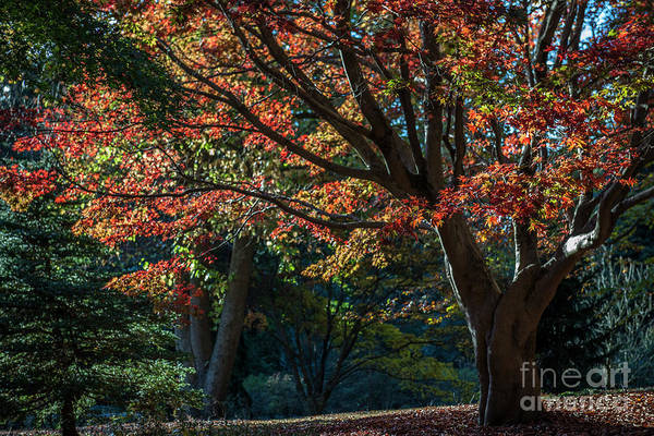 Photograph - Autumn In Asheville by Dale Powell