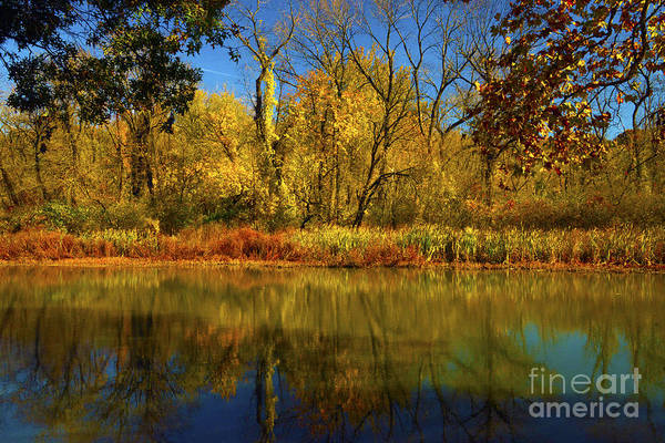 Wall Art - Photograph - Autumn Lakeside Colors  by Paul W Faust - Impressions of Light