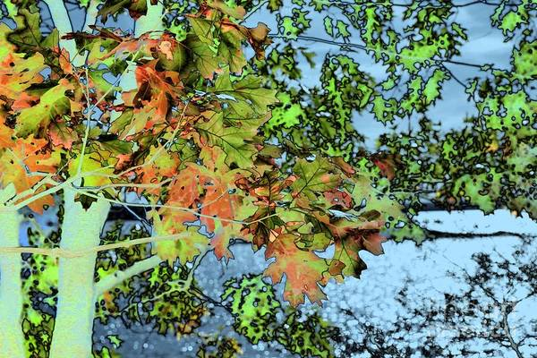 Photograph - Autumn Leaves by Marcia Lee Jones