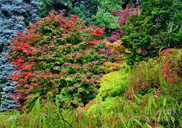 Photograph - Autumn Leaves by Martyn Arnold