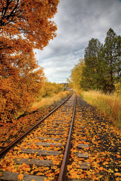 Photograph - Autumn On The Tracks by David Patterson