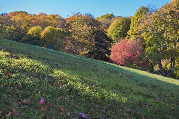 Photograph - Autumn Palette by Tom Singleton