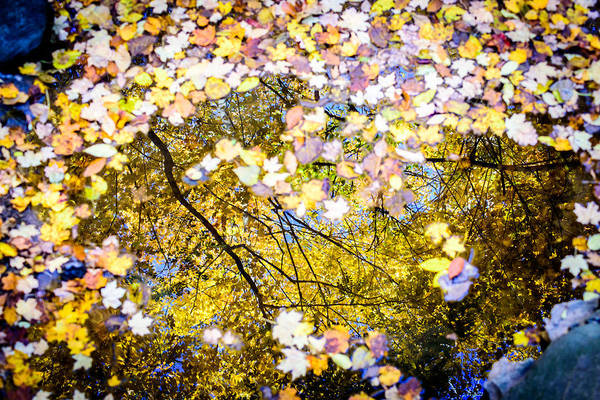 Photograph - Autumn Reflections by Randy Scherkenbach