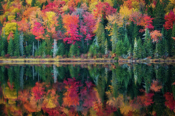 Photograph - Autumn Reflections by Tracy Munson