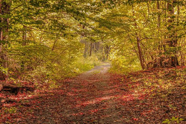 Photograph - Autumn Roads by Rod Best