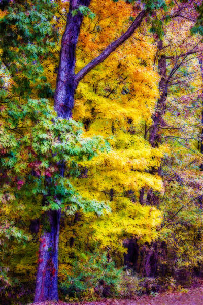 Photograph - Autumn Splendor by Barry Jones