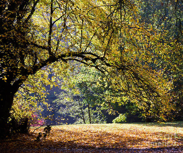 Photograph - Autumn Trees by Colin Rayner