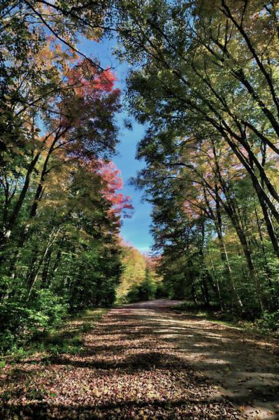 Photograph - Autumn Walk by David Patterson