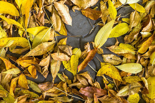 Photograph - Autumnal Leaves On Stone by John Williams