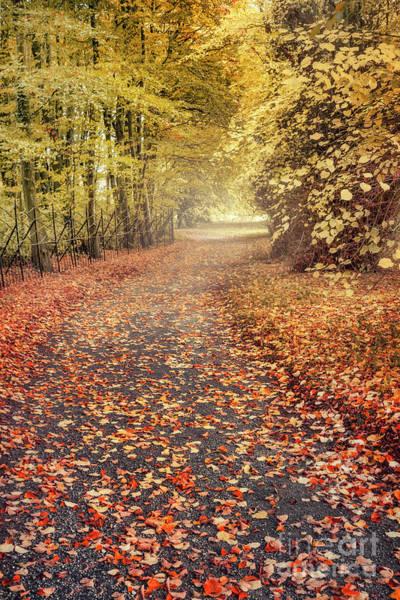 Wall Art - Photograph - Autumnalia by Evelina Kremsdorf