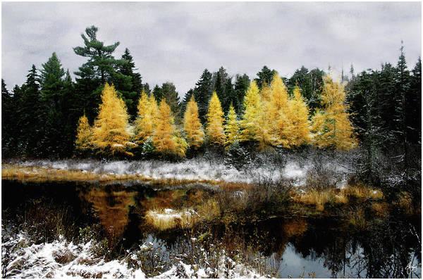 Photograph - Autumns Final Gold by Wayne King
