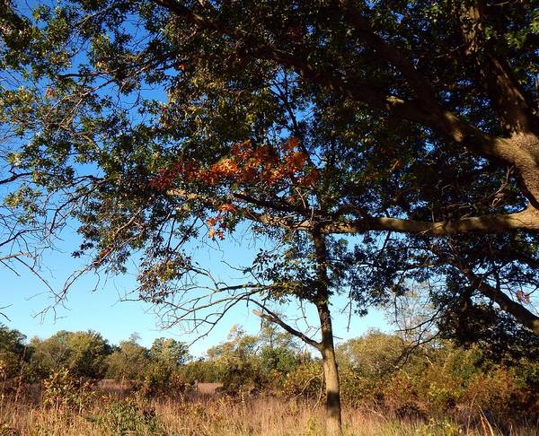 Photograph - Autumn's First Blush by Wild Thing