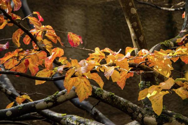 Photograph - Fall Foliage by Marilyn Wilson