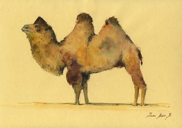 Camel Painting - Bactrian Camel by Juan  Bosco