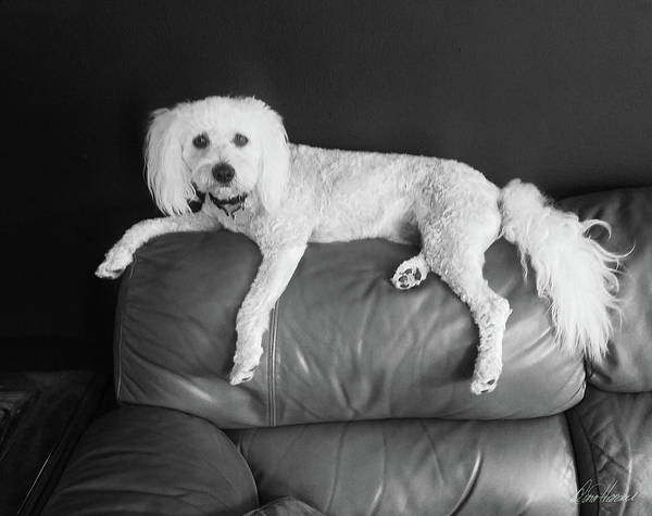 Photograph - Bailey by Diana Haronis