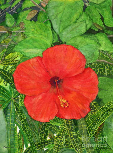 Hibiscus Flower Painting - Balinese Hibiscus Rosa by Melly Terpening