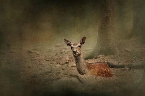 Bambi Mixed Media - Bambi by Heike Hultsch