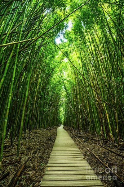 Wall Art - Photograph - Bamboo Forest by Jamie Pham