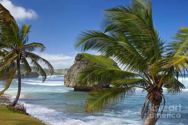 Photograph - Barbados by Brian Jannsen