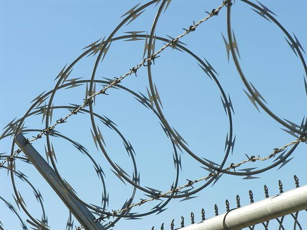 Pokes Wall Art - Photograph - Barbed Wire by Shirley Stevenson Wallis