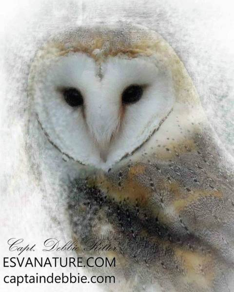Photograph - Barn Owl by Captain Debbie Ritter