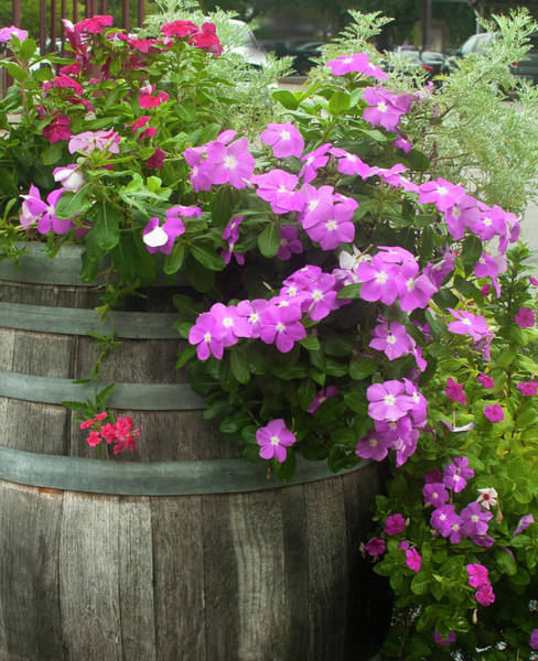 Photograph - Barrel Of Flowers by Brian Kinney