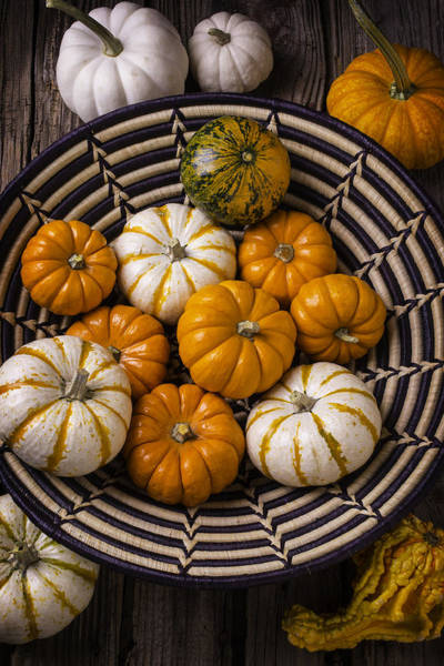 Wall Art - Photograph - Basket Full Of Small Pumpkins by Garry Gay