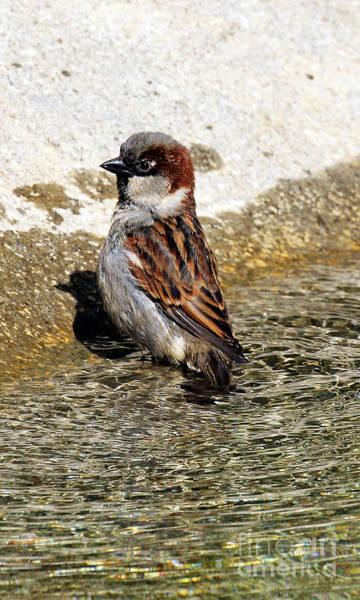 Photograph - Bath Time by Jennifer Robin