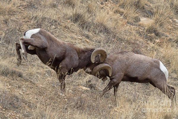 Photograph - Battering Rams by Jim Garrison