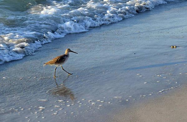 Photograph - Beach Bird by Larah McElroy