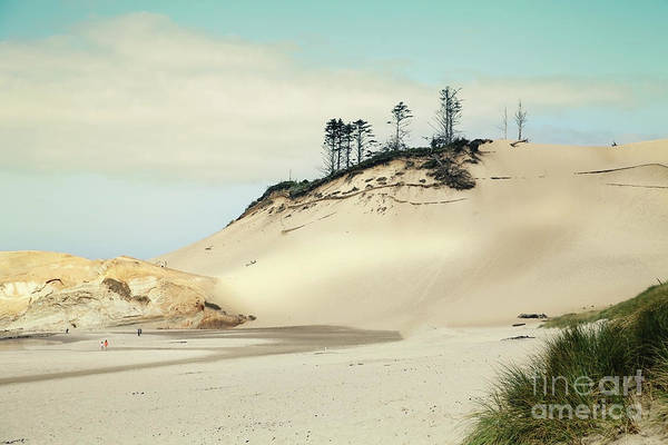 Wall Art - Photograph - Beach Dunes by Sylvia Cook