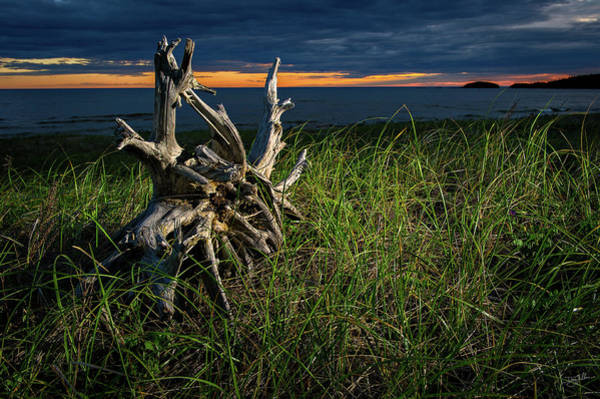 Photograph - Beached II by Doug Gibbons