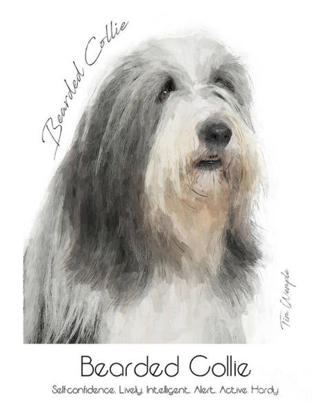 Digital Art - Bearded Collie Poster by Tim Wemple