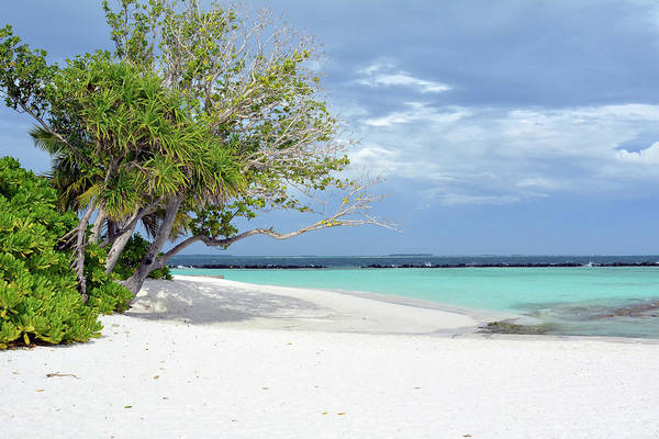 Photograph - Beautiful Beach In Maldives With Exotic Vegetation And Blue Water by Oana Unciuleanu