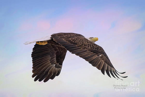 Wall Art - Photograph - Beauty In Flight by Deborah Benoit