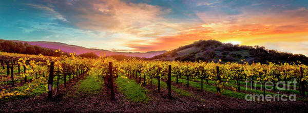 Wall Art - Photograph - Morning Sun Over The Vineyard by Jon Neidert
