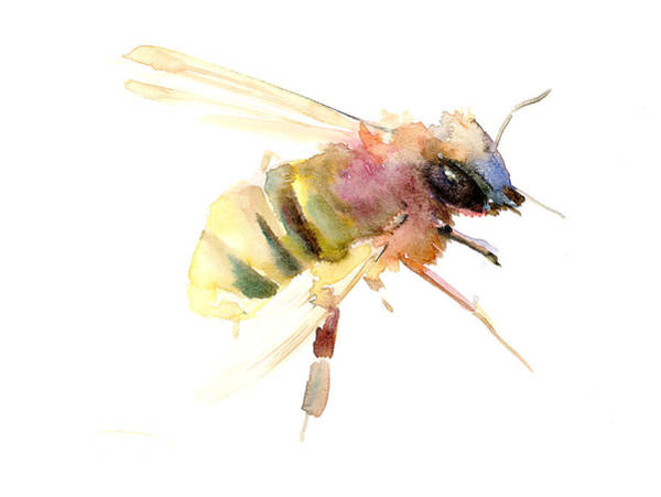 Bees Wall Art - Painting - Bee by Suren Nersisyan