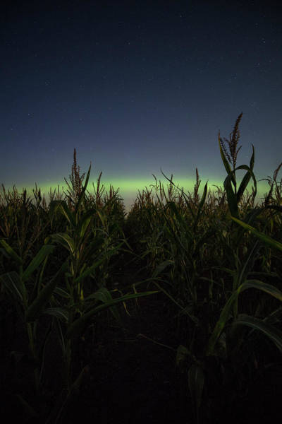 Wall Art - Photograph - Behind The Rows by Aaron J Groen
