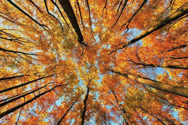 Photograph - Beneath The Canopy by Edward Kreis