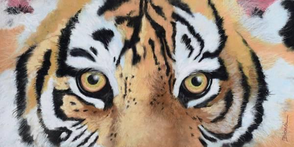 Painting - Bengal Eyes by Janet Biondi