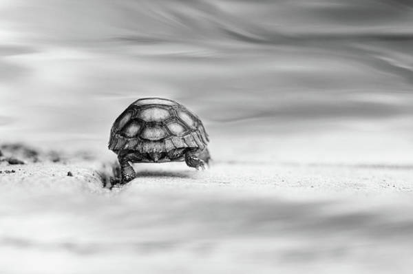 Turtle Photograph - Big Big World by Laura Fasulo