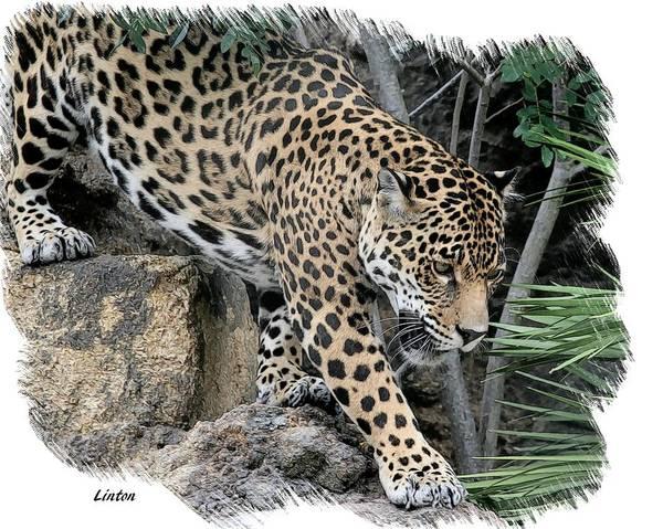 Digital Art - Big Cat by Larry Linton