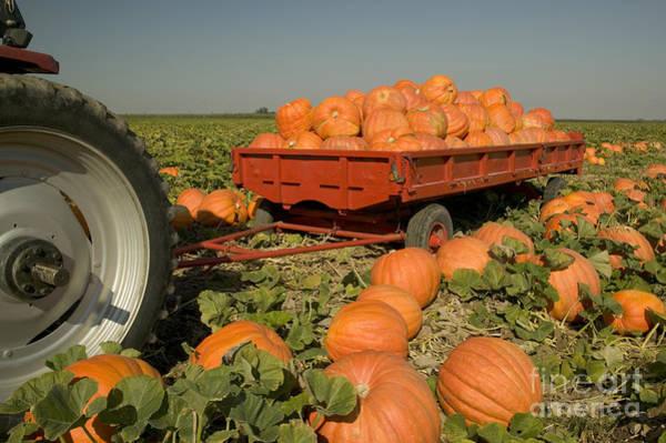 Mac Photograph - Big Mac Pumpkins On A Trailer by Inga Spence