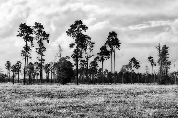 Thicket Photograph - Big Thicket National Preserve by L O C