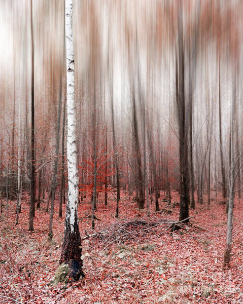 Photograph - Birchforest In Fall by Hannes Cmarits