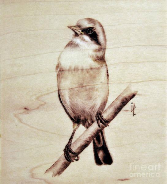 Pirografia Wall Art - Pyrography - Bird by Ilaria Andreucci