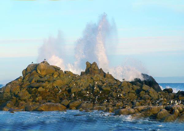 Wall Art - Photograph - Bird Island Ocean Spray  by Barbara Snyder
